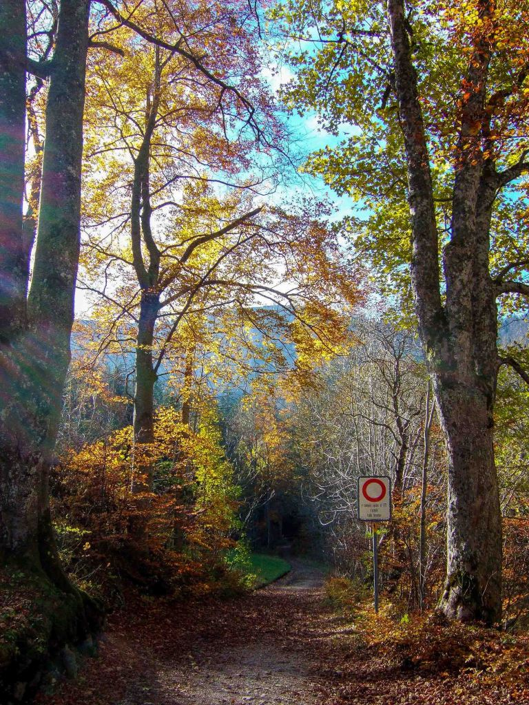 Autumn colors in Black forest