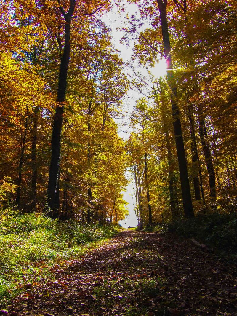 Autumn colours in Black Forest